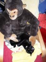 Maunzerle/151210/maunzerle-und-der-affe-i Maunzerle und der Affe I