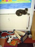 Mausi/102633/mausi-und-das-katzenkind Mausi und das Katzenkind