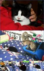 Mauzi/169297/kitty-mauzi-ist-da Kitty-Mauzi ist da