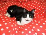 Mauzi/169676/kitty-mauzi-neues-zuhause Kitty-Mauzi neues zuhause