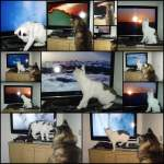 Joschi und das Baby/109403/montage-fernseh-katzen Montage Fernseh-Katzen