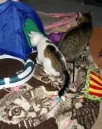 Mausi und das Katzenkind/103982/katzenkind-in-der-naehe-von-mausi Katzenkind in der Nähe von Mausi