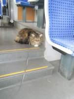 Kater Joschi/141259/joschi-im-zug Joschi im Zug