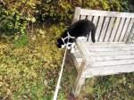 Kitty-Mauzi/169687/kitty-auf-der-bank Kitty auf der Bank