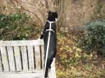 Kitty-Mauzi/169688/kitty-auf-der-bank-im-hof Kitty auf der Bank im Hof