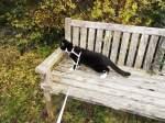 Kitty-Mauzi/169813/kitty-mauzi-auf-der-hofbank Kitty-Mauzi auf der Hofbank