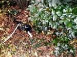 Kitty-Mauzi/169816/kitty-in-der-wildnis kitty in der Wildnis