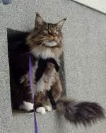Joschi/109775/ich-rette-mich-erstmal-ins-fensterchen Ich rette mich erstmal ins Fensterchen