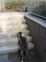 Joschi/127292/katzen-auf-der-treppe Katzen auf der Treppe
