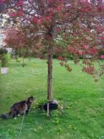 Joschi/132953/joschi-und-die-baumbluete-2011 Joschi und die Baumblüte, 2011