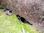 Joschi/169840/kitty-und-joschi kitty und  joschi