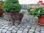 Katze von Eichicht/91216/katze-von-eichicht-28-8-2010 Katze von Eichicht   28-8-2010
