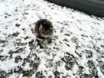 joschi/106091/kater-im-ersten-schnee Kater im ersten Schnee