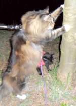 joschi/130101/kater-joschi-am-baum-2011 Kater Joschi am Baum 2011