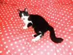 kitty-mauzi/169672/kitty-mauzi-gepunktete-decke Kitty-Mauzi gepunktete Decke
