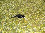 kitty-mauzi/169785/kitty-mauzi-draussen Kitty-Mauzi draussen