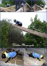 maunzerle/137123/maunzerle-aktiv-2011 Maunzerle aktiv 2011