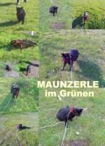 maunzerle/92166/maunzerle-unterwegs-im-gruenen-2010 Maunzerle unterwegs im Grünen, 2010